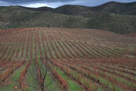 douro-vineyards
