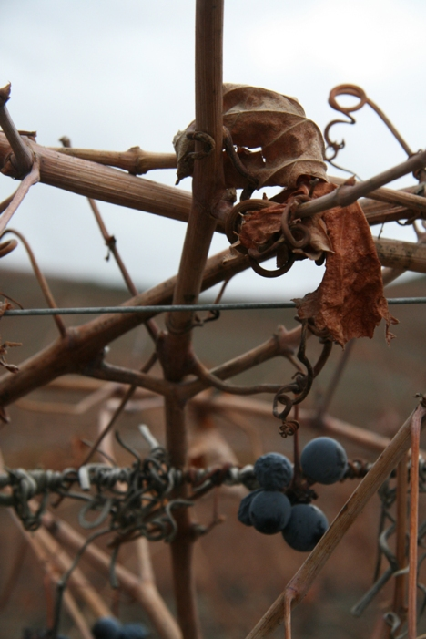 Of the 90% of the vines cultivated at Ervamoira, 16% belong to the Tinta Barroca variety, 23% to Touriga Nacional, 13% to Touriga Franca, 13% to Tinta Roriz, 10% to Tinta da Barca and 15% mixture.