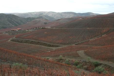ramos-pinto-land